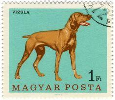 All sizes | Hungary postage stamp: vizsla dog | Flickr - Photo Sharing! #stamp #postage #vintage #dog