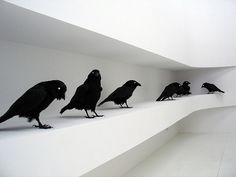 tumblr_ld2asePSTL1qaf7nco1_500.jpg (500×375) #black and white #crow