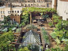 rooftop garden #photography #green #top #balcony #garden #roof