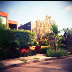 The House © Adele Jancovici 2015 Color print on paper #LosAngeles #Photography #art #palmtree #color #colorsplash #house #architecture