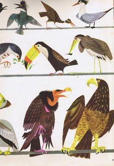 Husband and Wife Team: Alice and Martin Provensen   Weddingbee PRO #illustration #bird