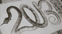 Incredible 2013 Chinese New Year Snake Drawing