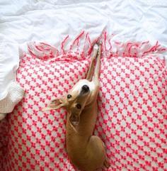 Most Dog Friendly Stores in America - TJ Maxx