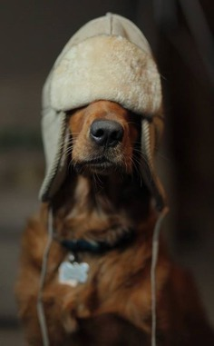"""dustyfleas: """"""""Who turned out the lights?"""" """" #dog"""