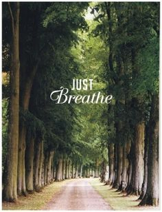 Tiffany Denise #trees #park #just breath