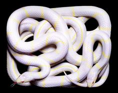 Eight Hour Day » Blog » The Best Thing I Saw Today • April 12, 2012 #photography #snakes