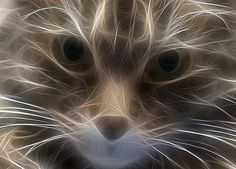 FFFFOUND! | fractaliuscat4231.jpg (JPEG Image, 500×358 pixels) #light #cat