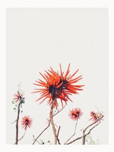 #flora #cologne #erythrina #coraltree PHOTOGRAPHIE © [ catrin mackowski ]