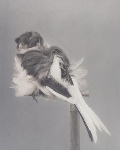 Carsten Höller Birds 2006