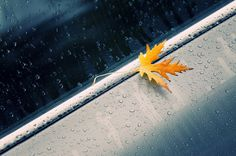 photo #rainy #day #leaf