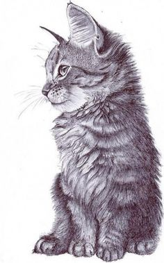 freja #ink #cat #fur #art #pen #cute #beauty
