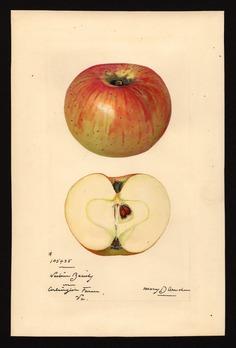USDA Watercolors