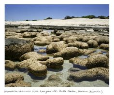 Rachel Sussman #inspiration #photography #nature
