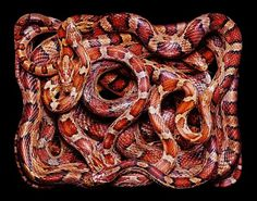 SERPENS #snakes #photography #serpents