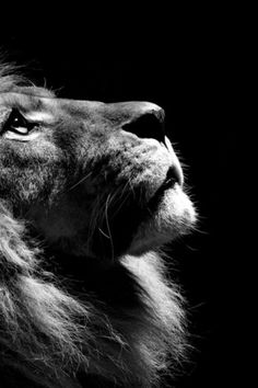 Creative Collider #photography #black and white #lion