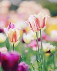 Beautiful Japanese Flowers Photos by Kaori Tanimoto