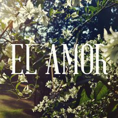 el ~ a m o r ~ ♥ #tale #fairy #summers #nature #light #love #flowers #green
