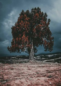 Tree. #forest #landscape