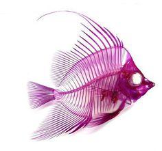 透明標本 (透明二重染色標本) マゼンタとシアンに輝く全く新しい形のインテリア標本 | デザインブログ #x-ray