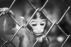 Category: Talents » Jonas Eriksson #black and white #monkey