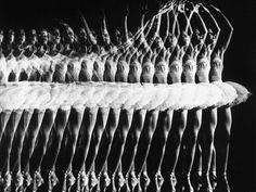 Black and White #Photography by Gjon Mili