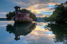 A 102 Year Old Transport Ship Sprouts a Floating Forest #floating #photography #nature #boat #ship #trees