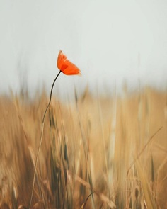 #floral_shots: Beautiful Macro Flower Photography by Christian Mu