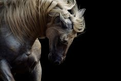 Horse Photo muscles