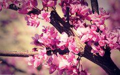 Vintage Pink Blossom