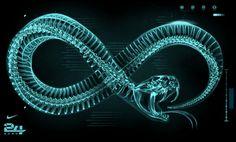 X ray Mamba #digital #illustration #art