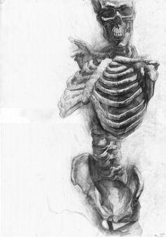 Piccsy :: bones #skull #bones #drawing #anatomy