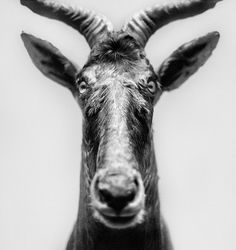 Black and White Photography by Andrea Alessio #inspiration #white #black #photography #and