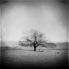 To Die Regretfully, photography by Leda Siloto #tree