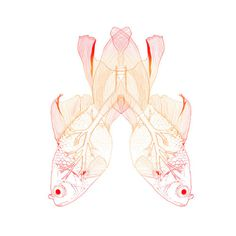 Lungs Fish - Illustration by Alessia Olivari