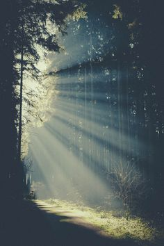 woods | via Tumblr #photography #landscape #forest #trees #sunlight #woods #rays