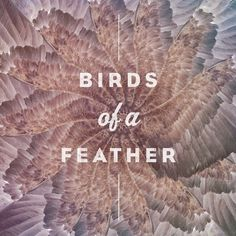 tumblr_lydulh5nsK1ro33ojo1_r1_1280.jpg (750×750) #tumblr #different #design #feather #birds #eagle #somethings #com #typography