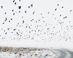 Photography by Tamas Dezso