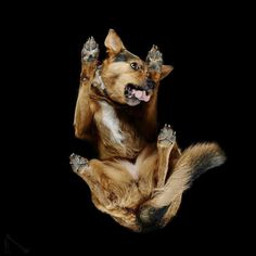 Under-Dogs: Dogs Pictured from Underneath by Andrius Burba