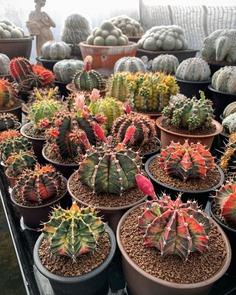 Wonderful Cactuses and Desert Plants by Wachirapol Deeprom