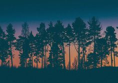 Trees. #sweden