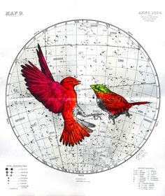 Fluorescent Mixed Media Animals by Louise McNaught #red #flight #bird