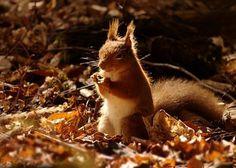 Animal Photography by Gavin Macrae » Creative Photography Blog #inspiration #photography #animals