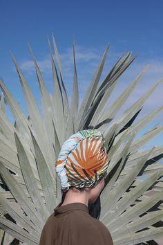 #palm #palm tree #desert
