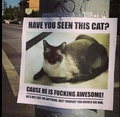 Have you seen me? #missing #flyer #fun #cat
