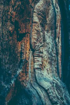 #woods #scandinavia