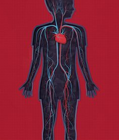 nervesveins #human #illustration #body #anatomy
