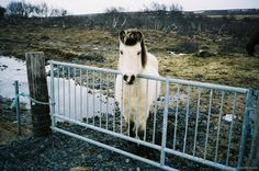 F1030012 #photography #horse