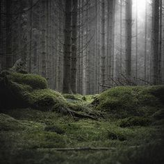 Wald on the Behance Network