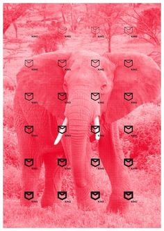mies van roy - typo/graphic posters #pink #van #elephant #roy #mies #poster #typography