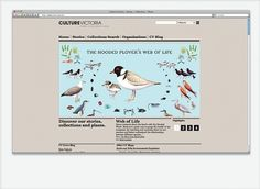 Culture Victoria Website | SUBFAUNA / Bench.li #birds #illustration #web #grey
